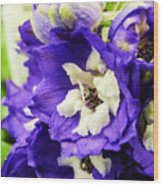 Blue And White Delphiniums Wood Print