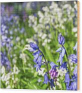 Blue And White Hyacinth Flowers Wood Print