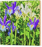 Blue And White Iris Wood Print