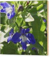 Blue And White Lobelia Wood Print