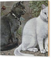Blue And White Short Haired Cats Wood Print