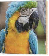 Blue And Yellow Macaw Vertical Wood Print
