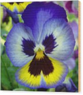 Blue And Yellow Pansy Wood Print