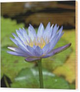 Blue And Yellow Water Lily Wood Print