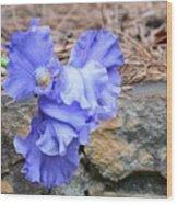 Blue Angel - Iris Wood Print