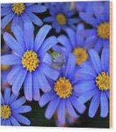 Blue Asters Wood Print