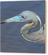 Blue Beak Wood Print
