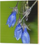 Blue Bells Are Ringing Wood Print