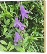 Blue Bells In Summer Wood Print