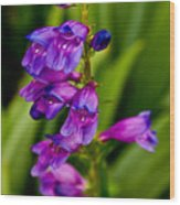 Blue Bells Wild Flower Wood Print
