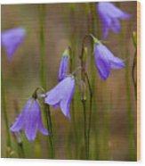 Blue Bells Wyoming Wood Print