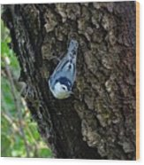Blue Bird 1 Wood Print