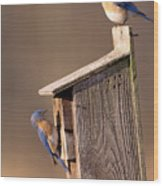 Blue Bird Couple Wood Print