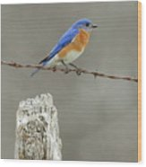 Blue Bird On Barbed Wire Wood Print
