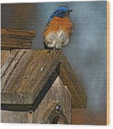 Blue Bird Songs Wood Print