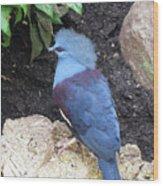 Blue Bird Washington D.c. National Aviary Wood Print