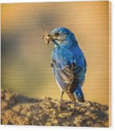 Blue Bird With Breakfast Wood Print