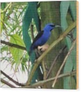 Blue Bird With A Curved Bill Wood Print