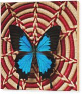 Blue Black Butterfly In Basket Wood Print