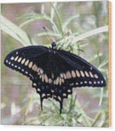 Blue Black Swallowtail Wood Print