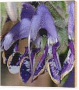 Blue Blooms Wood Print