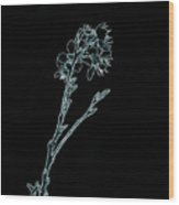 Blue Blossoming Branch In Prayer Wood Print