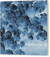 Blue Blossoms Wood Print