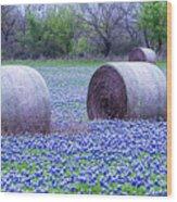 Blue Bonnets In Field Wood Print