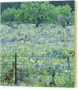 Blue Bonnets,poppies And Willow Tree 2 Wood Print