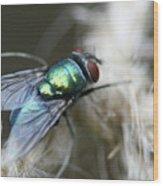 Blue Bottle Fly On Garden Twine Wood Print