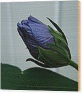 Blue Bud Wood Print