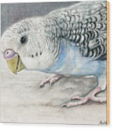 Blue Budgie Wood Print