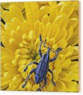 Blue Bug On Yellow Mum Wood Print