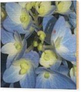 Blue Butterflies Wood Print