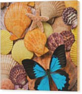 Blue Butterfly And Sea Shells Wood Print
