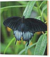 Blue Butterfly II Wood Print