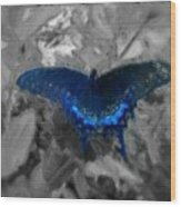Blue Butterfly In Charcoal And Vibrant Aqua Paint Wood Print