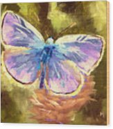 Blue Butterfly Wood Print