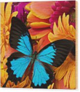 Blue Butterfly On Brightly Colored Flowers Wood Print by Garry Gay