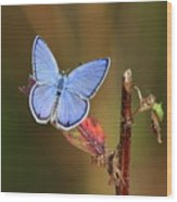Blue Butterfly On Leaf Wood Print