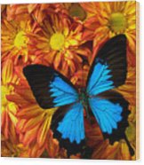 Blue Butterfly On Mums Wood Print