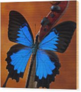 Blue Butterfly On Violin Wood Print