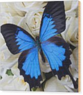 Blue Butterfly On White Roses Wood Print