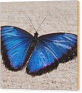Blue Buttterfly Wood Print
