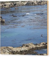 Blue California Bay Wood Print