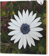 Blue Center Daisy Wood Print