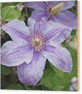 Blue Clematis Wood Print