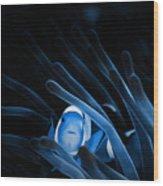 Blue Clownfish Big Size 15x11 - Beach House Art Wood Print
