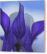 Blue Columbine I Wood Print