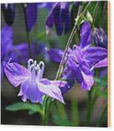 Blue Columbine Squared 3 Wood Print